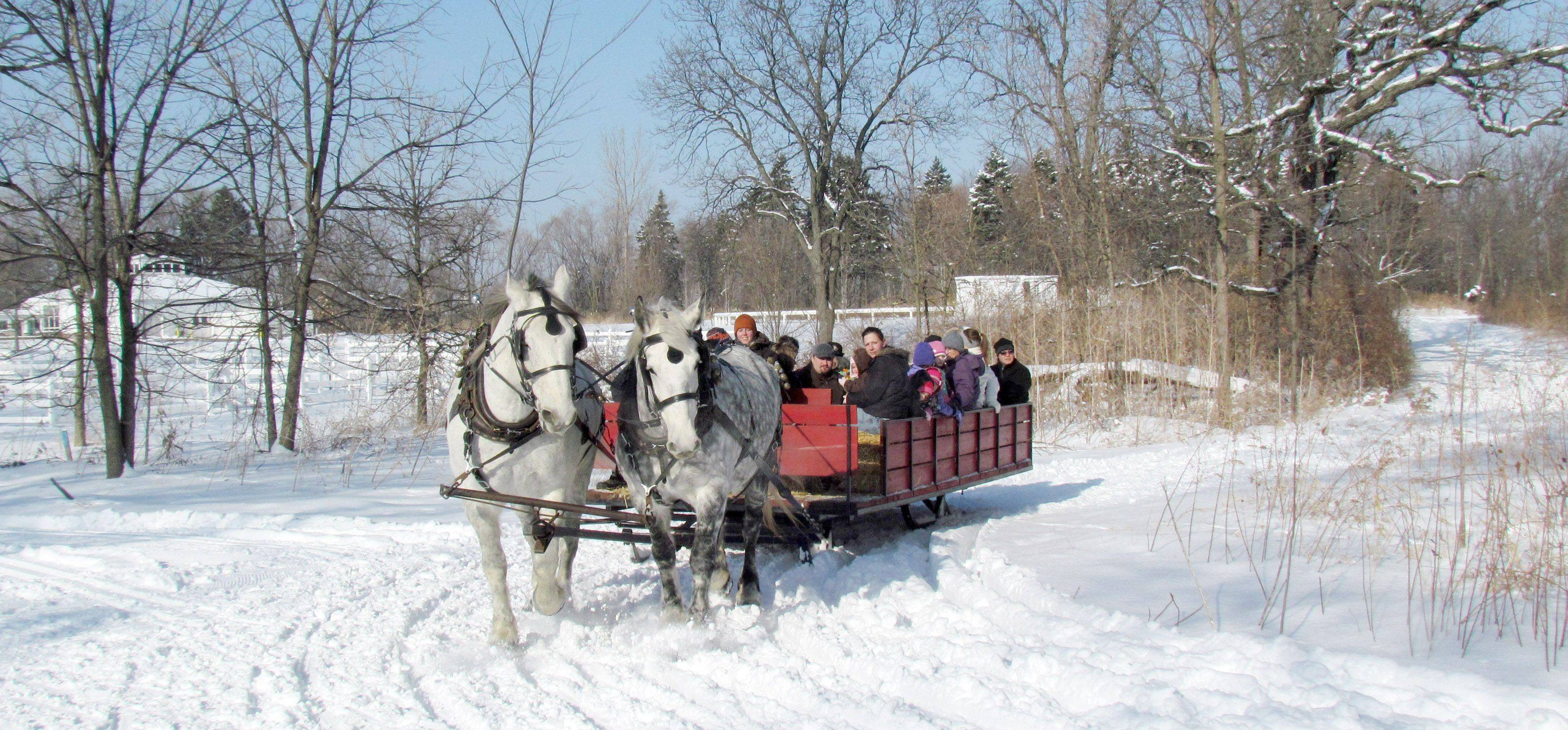 Forest Preserve staff member Cameron Pauling is at the reigns as she takes people on a slow sleigh ride through the Danada Forest Preserve in Wheaton Tuesday.