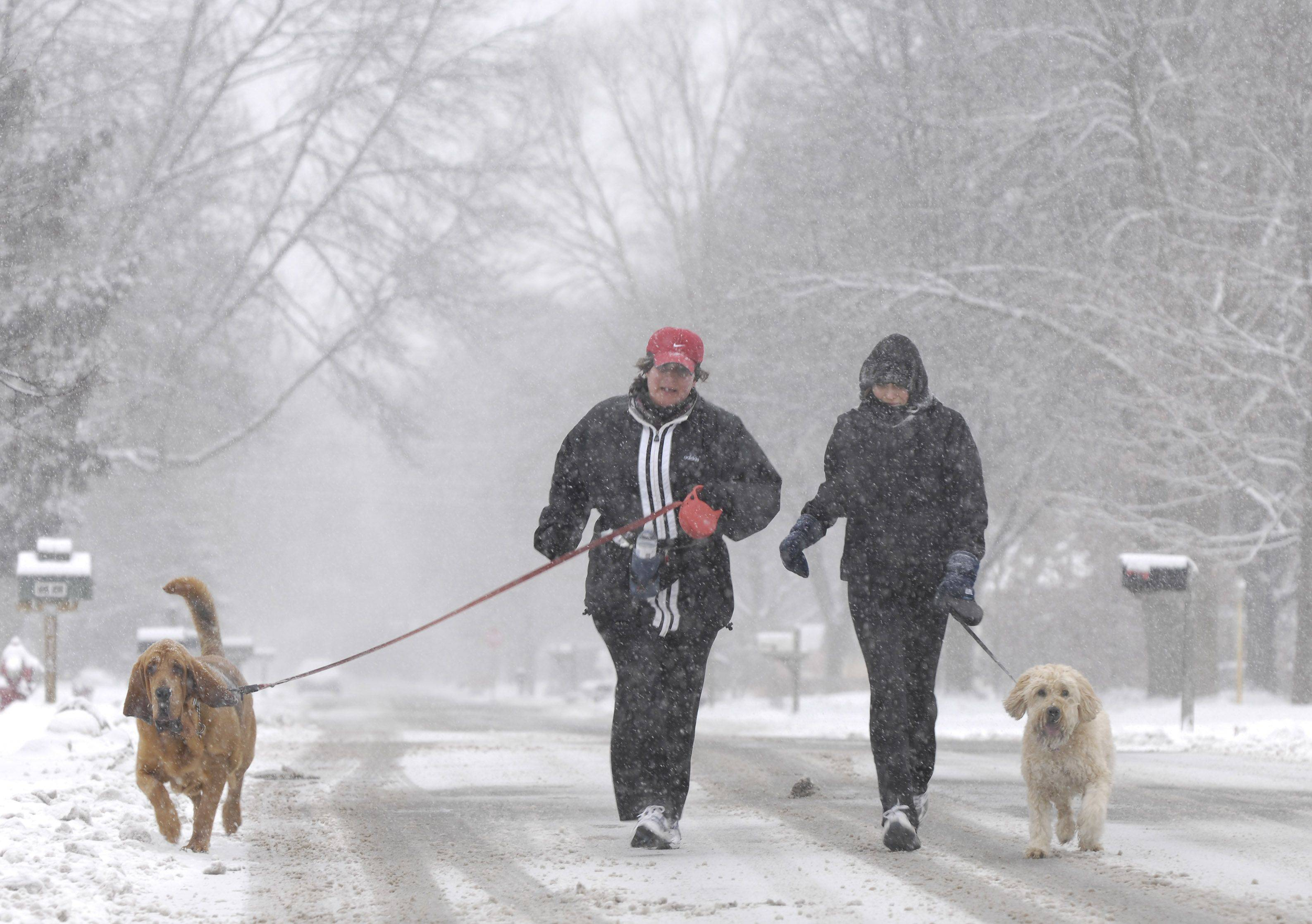 "Stacy Smith and her dog ""Leo"" along with Colleen Gaughan and her dog ""Boomer"" take a jog in the Scarsdale neighborhood of Arlington Heights."