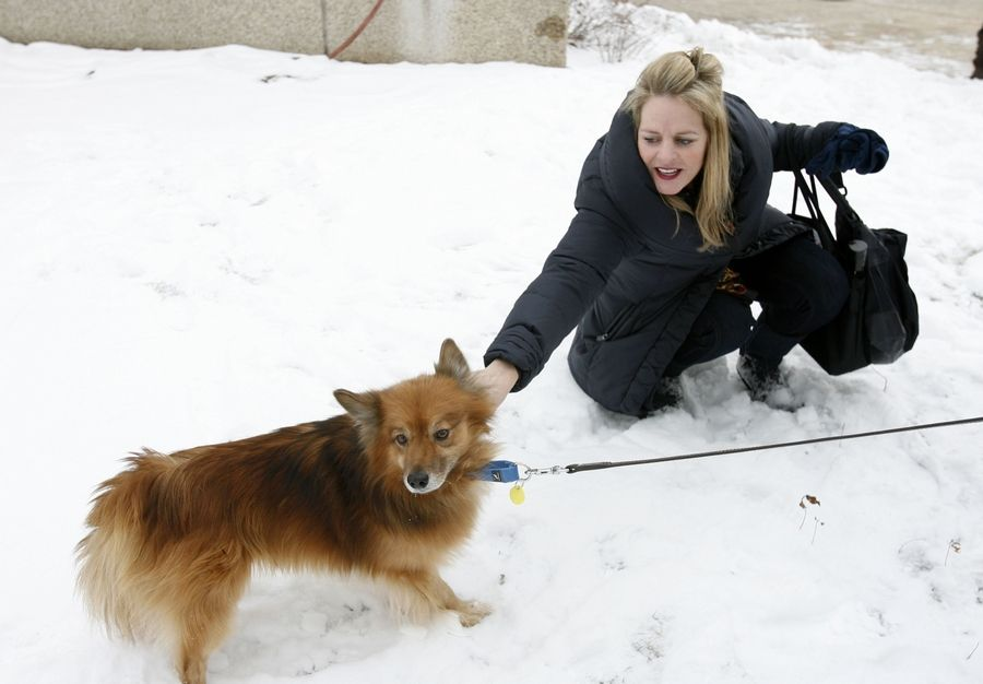 Rusty, a stray dog who was on the lam in Oak Brook for more than three years, is on his way to a new home in a Utah animal sanctuary, thanks to the Hinsdale Humane Society and generous donations. At right, Ann Obernesser, Chicago, of the Follet Higher Education group, bids farewell to Rusty.