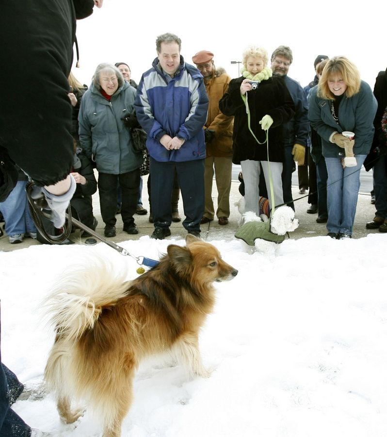 Rusty, a stray dog who was on the lam in Oak Brook for more than three years, is going to a new home in Utah. He'll leave behind many friends, who gathered at the Follet Higher Education grounds Friday to bid him farewell.