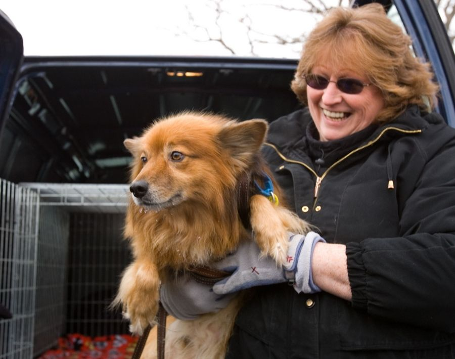 Jenny Vlazny of the Hinsdale Humane Society loads Rusty, a stray dog who was on the lam in Oak Brook for more than three years, into a van to begin his journey to a new home in a Utah animal sanctuary.