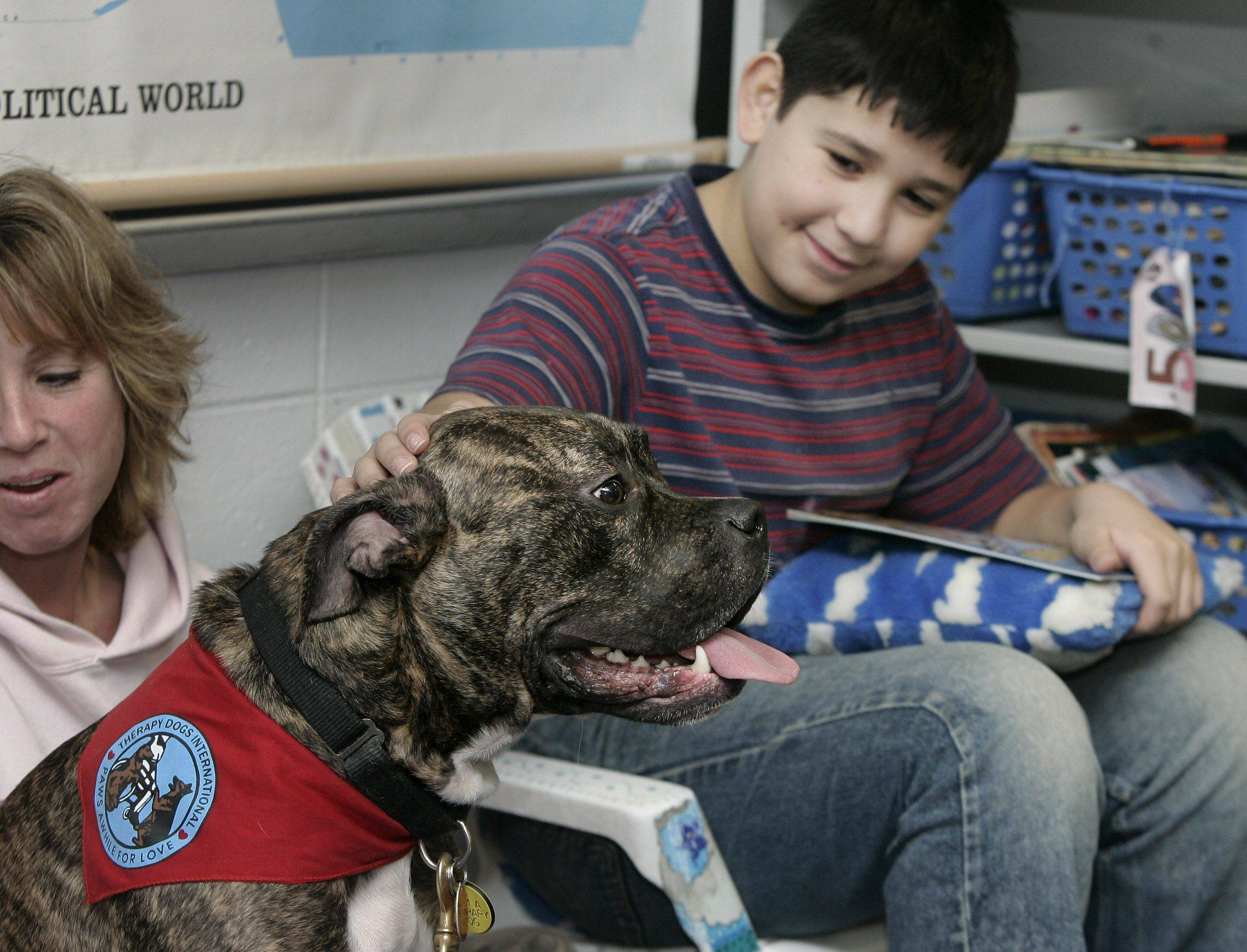 Fifth-grade student Christopher Macias, 10, pets Bitz, a pit bull, as students read in class Monday at Raymond Ellis School in Round Lake Beach. The therapy dogs were brought in by dog handlers Karen Boeing and Traci McCarthy as a new way to interact with children, help them read aloud, and improve their reading skills.