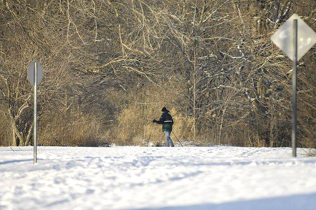 Despite the freezing temperature, a cross country skier cruises in LeRoy Oaks Forest Preserve Thursday.