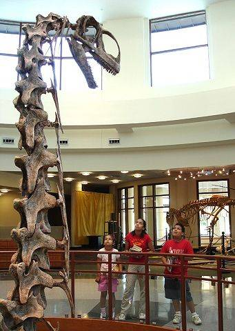 @SP Caption:Life-sized dinosaur skeletons -- inlcuding Jobaria, a 33-foot-tall sauropod -- visited Gail Borden Public Library in 2005.