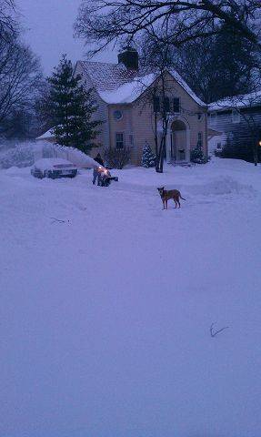 Sandy the dog keeps a close eye as residents dig out on Margret Street in Des Plaines.