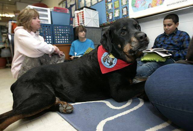 Ruger, a Rottweiler, sits with fifth-grade students as dog handlers Karen Boeing and Traci McCarthy bring the dogs to Raymond Ellis School in Round Lake Beach. The therapy dogs help students build confidence in their reading skills.