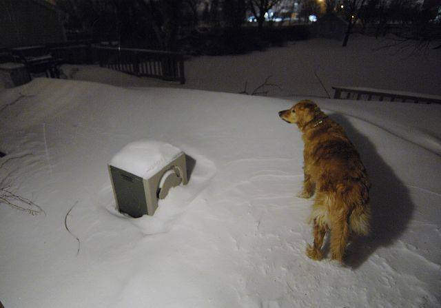 Reuben is puzzled how to get past large snowdrifts in St. Charles Wednesday morning.