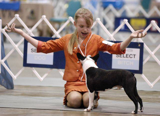 It didn't take long for Marie Stahmer, 12, of Woodstock to learn how to handle and show a grand champion dog. She also trains horses and shows other people's dogs.
