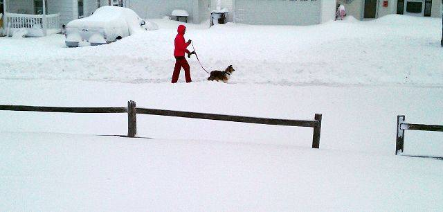 A woman takes her dog for a walk along Glen Ave. in Crystal Lake Wednesday morning.