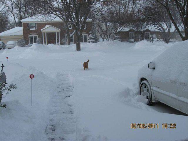 Jim Larsen says his dog, Skip, loves the snow.