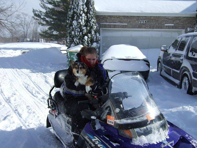 Steve Jensen's corgi, Tess, hops on a snowmobile for a ride in Wheeling.