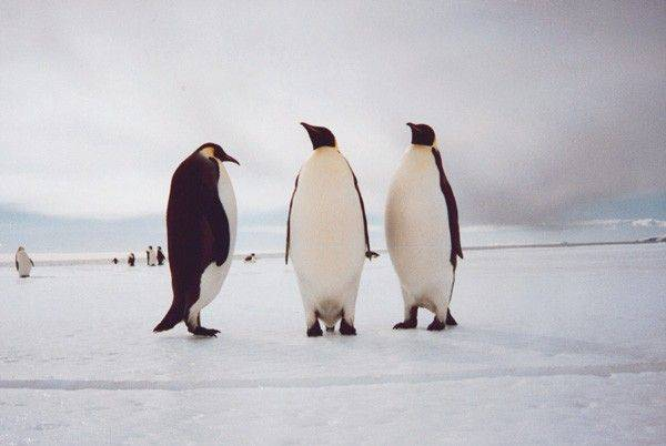 Antarctica is a series of islands covered by ice. Think of it as a frozen Hawaii with penguins.