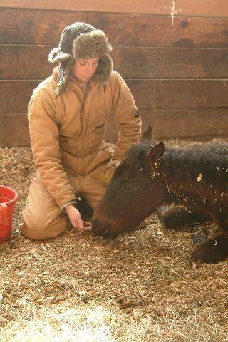 Hooved Animal Rescue Protection Society caretaker James Griffin assists one of five severely malnourished horses removed late last month from a dilapidated barn near Elgin. The horses have been brought back to health and will soon be made available for adoption.