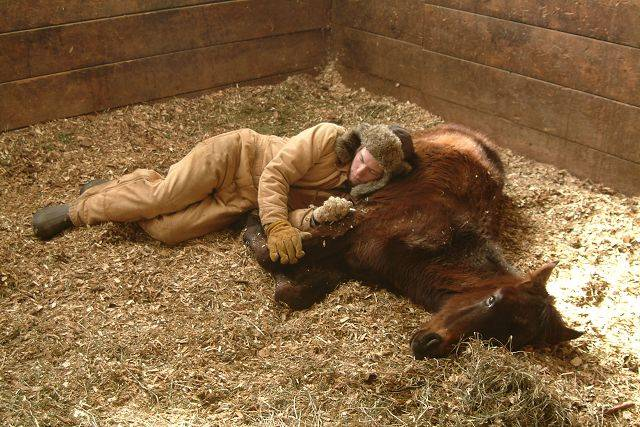 James Griffin, a caretaker for the Hooved Animal Rescue Protection Society, rests alongside Jake, one of five horses rescued from an Elgin-area barn late last month. Griffin spent days hand-feeding the colt back to health.