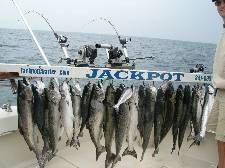 Fish caught by anglers aboard Matt Porter's Jackpot Fishing Charters boat on Lake Michigan.