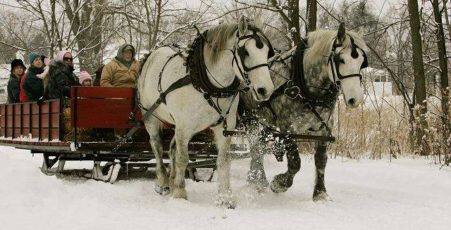 More than 100 people enjoyed horse-drawn sleigh rides Sunday at Danada Equestrian Center in Wheaton.