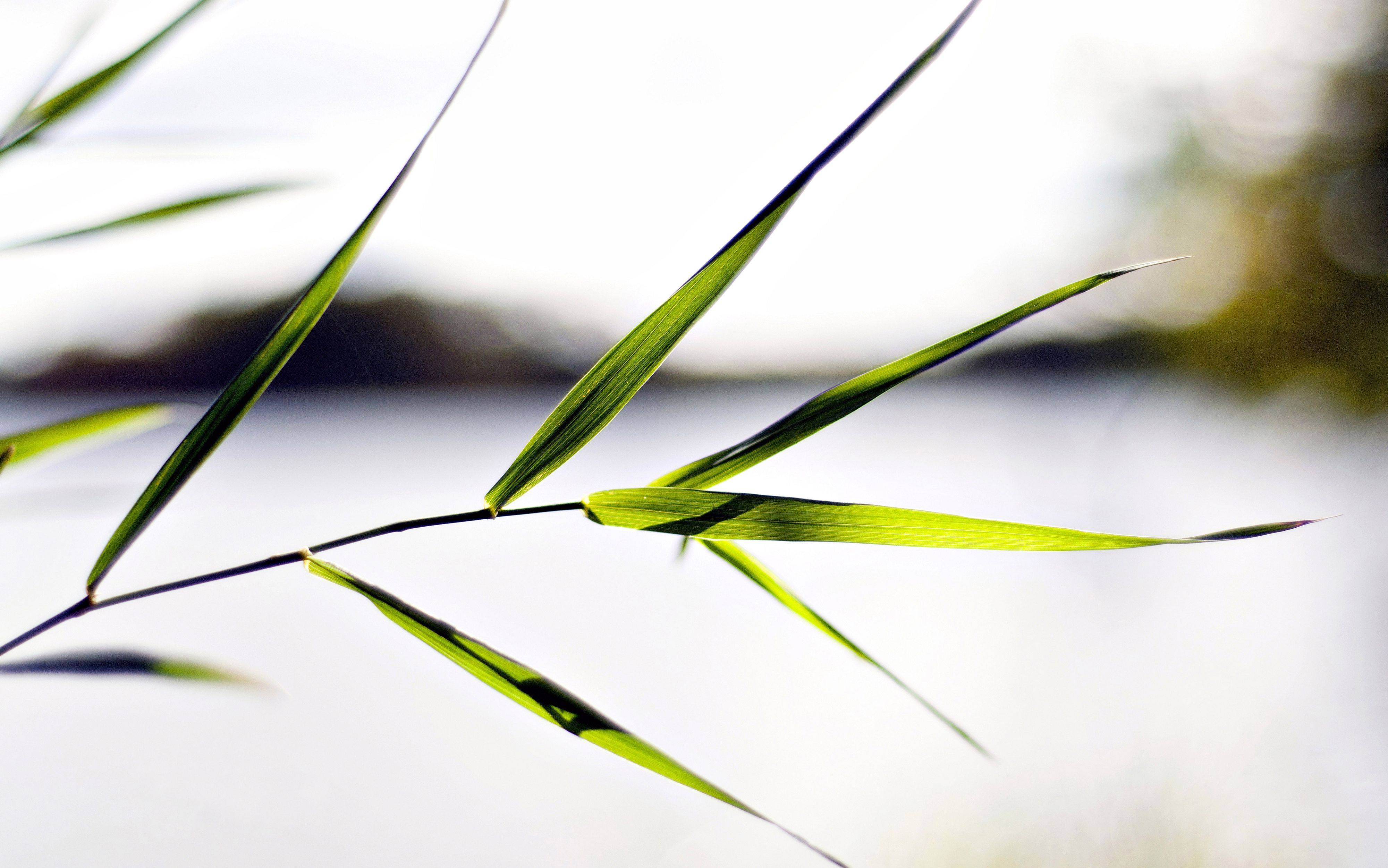 Mario Bialek of Palatine,A long stem of grass at the forest preserve.