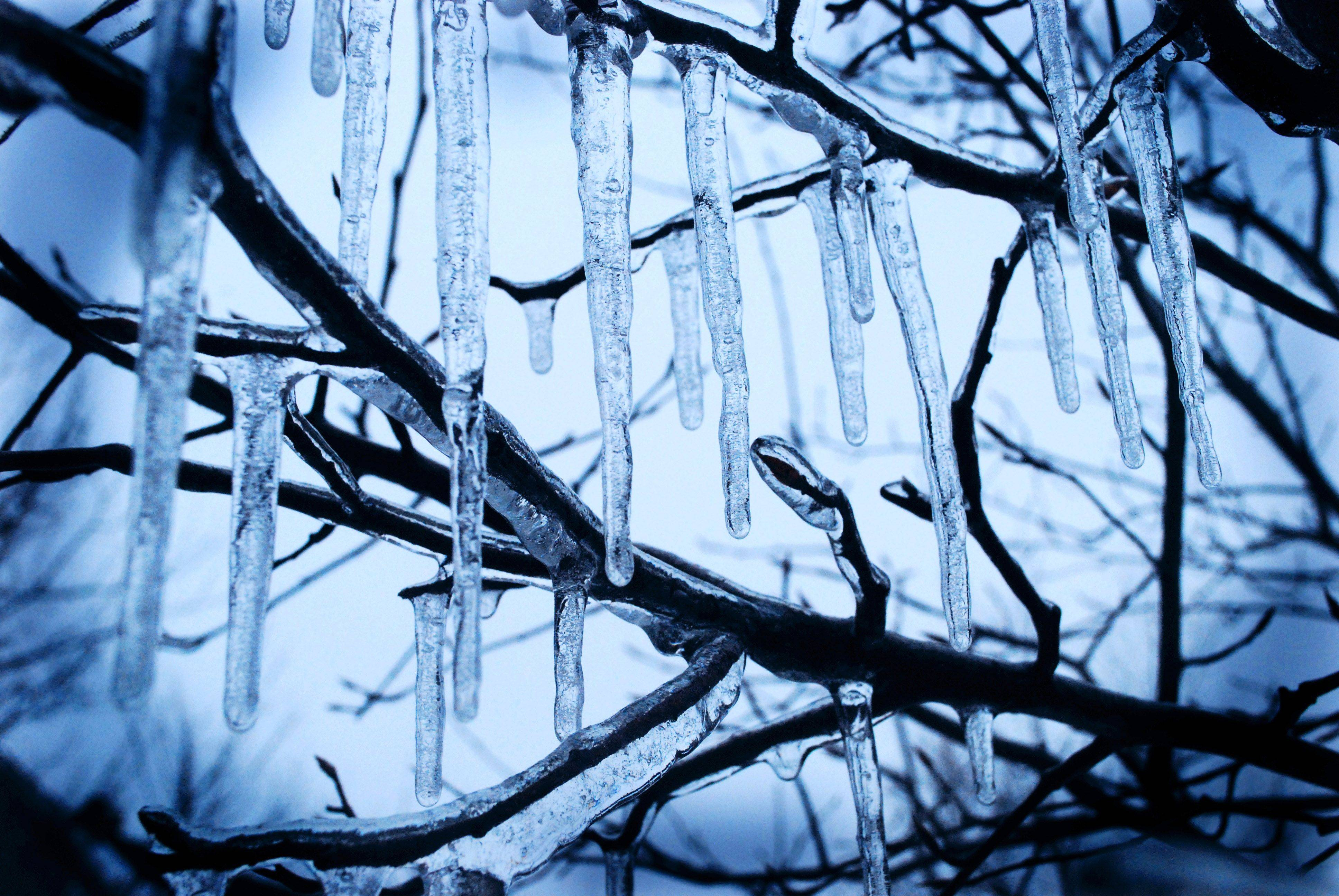 Brendan McGee of BataviaThis photo shows icicles hanging from a frozen tree in my backyard.