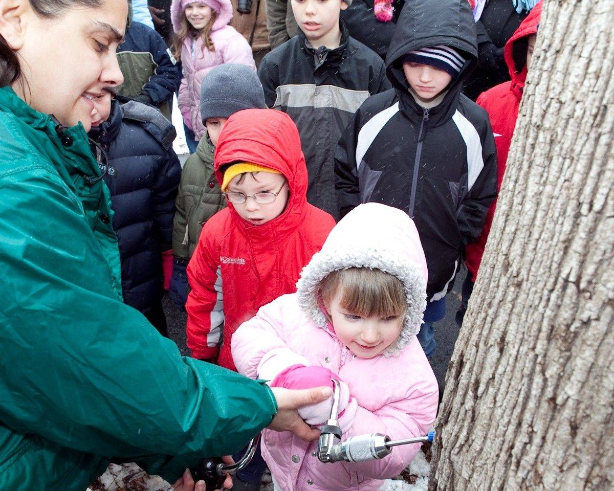 Margaret Gazdacka, left, of the Red Oak Nature Center, shows an audience of young onlookers how a maple tree is tapped. Hourly demonstrations like these will be held Saturday during MapleFest at Red Oak.