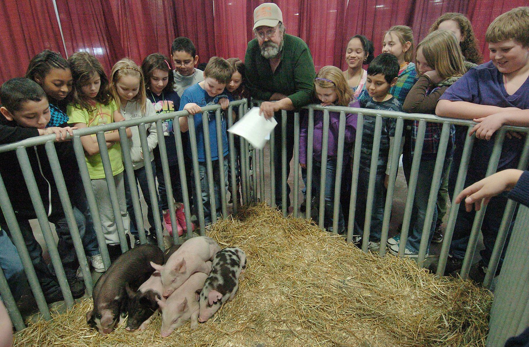 Duane Beelow, center, of the Lake County Farm Heritage Association, talks to fourth graders from Big Hollow Elementary School in Ingleside about his pigs at an Ag Expo at the Lake County Fairgrounds.