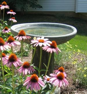 Feeders, birdbaths and bird-friendly plantings will increase specie varieties on your property.