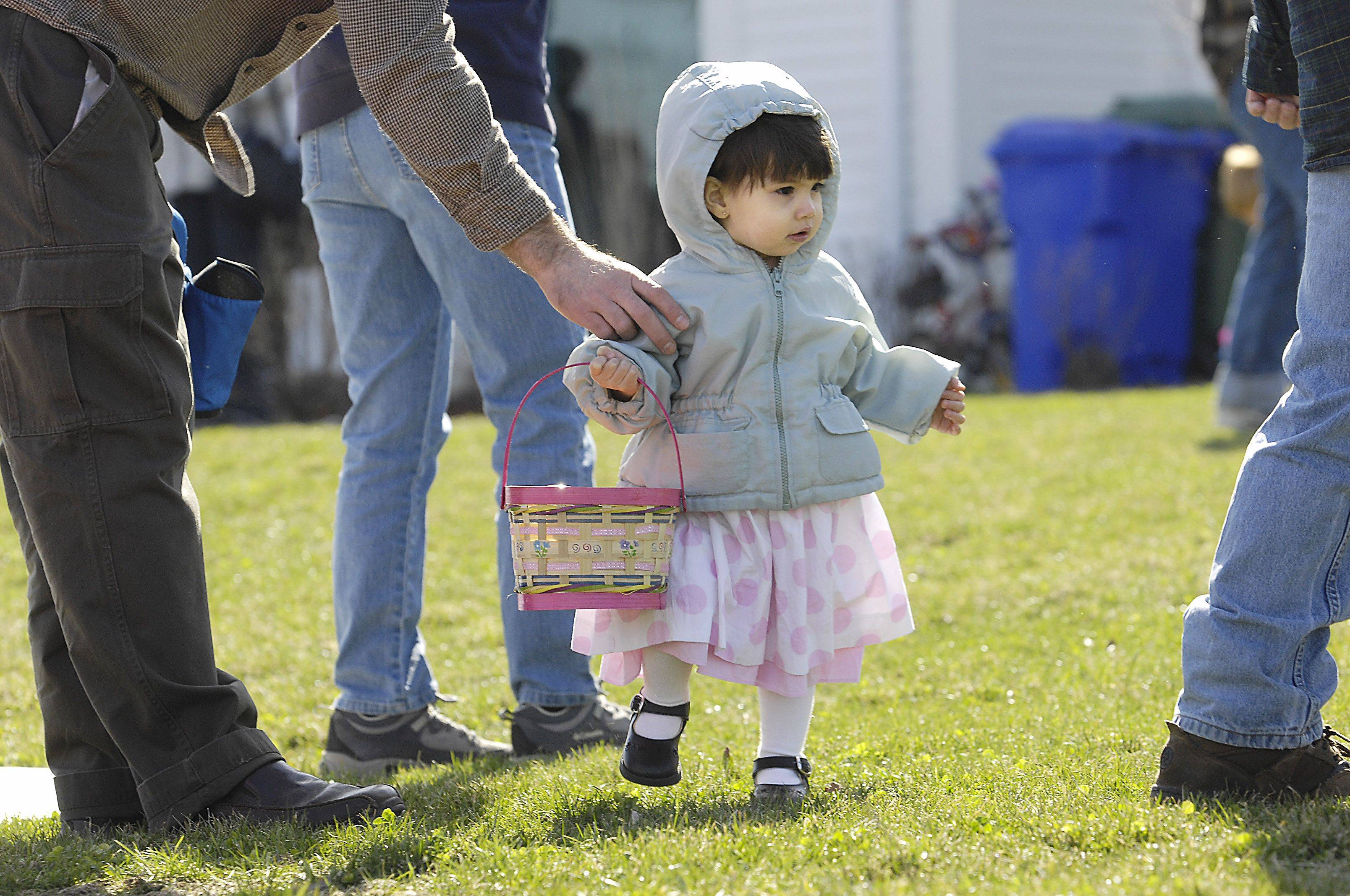 John Starks/jstarks@dailyherald.com � 18-month-old Samantha carries a basket as big as she can handle during an egg hunt Sunday at Faith Baptist Church at Mill Creek in Geneva. She was with her dad Tom Sipes of Geneva.