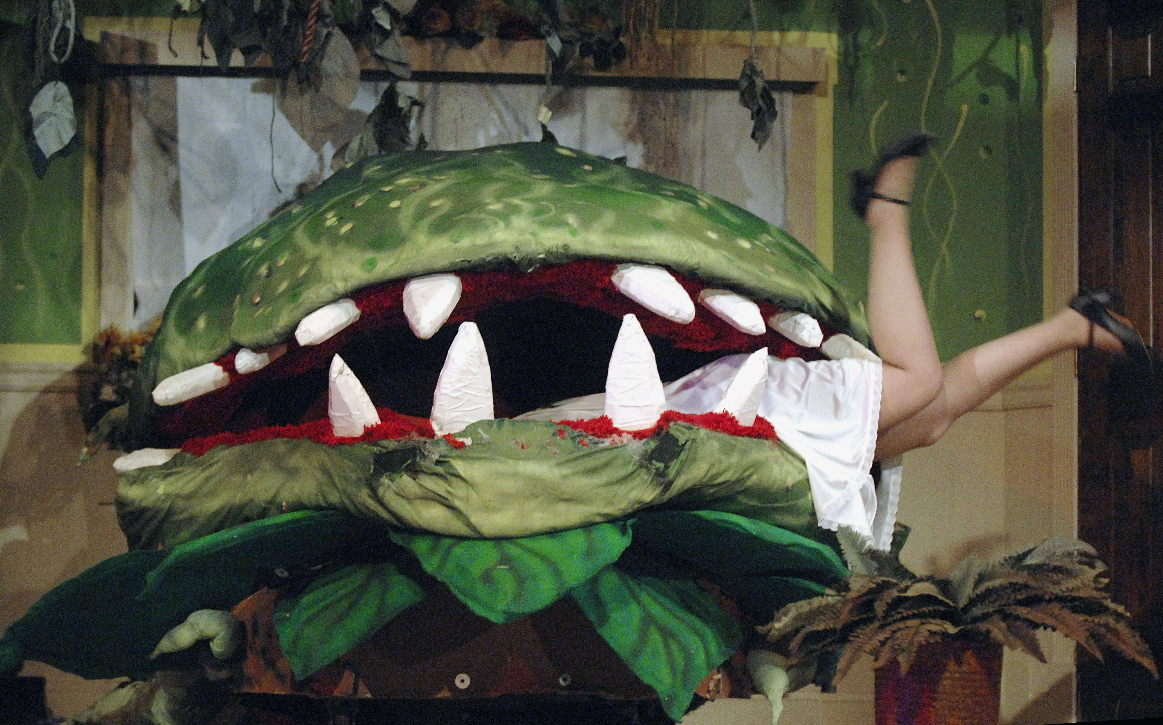 "Audrey II attempts to eat Audrey, played by senior Maddie Mueller, in Batavia High School's production of ""Little Shop of Horrors."""