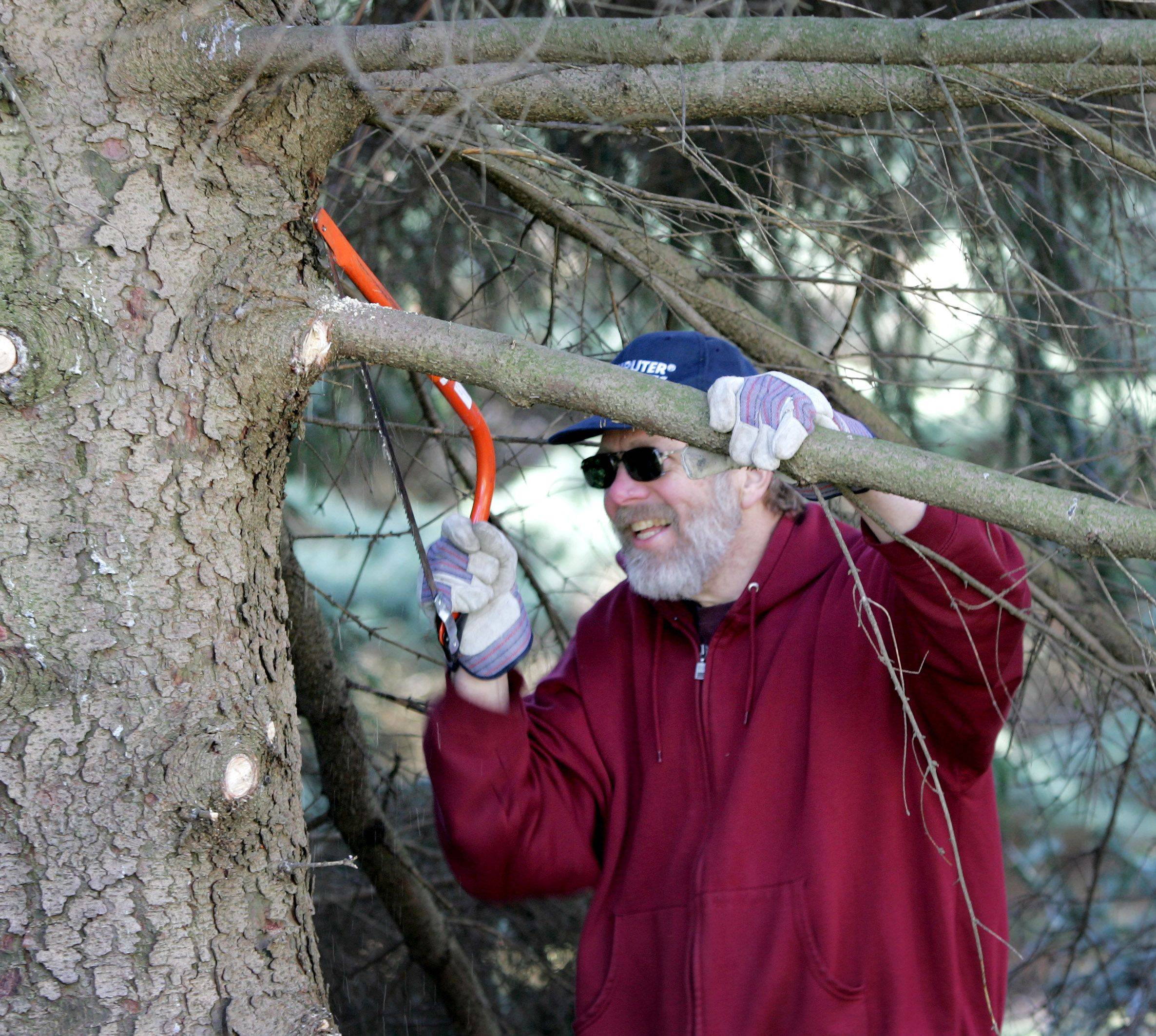 Paul Wissmiller, a software engineer at CA Technologies in Lisle, cuts branches Thursday at St. James Farm Forest Preserve near Warrenville.