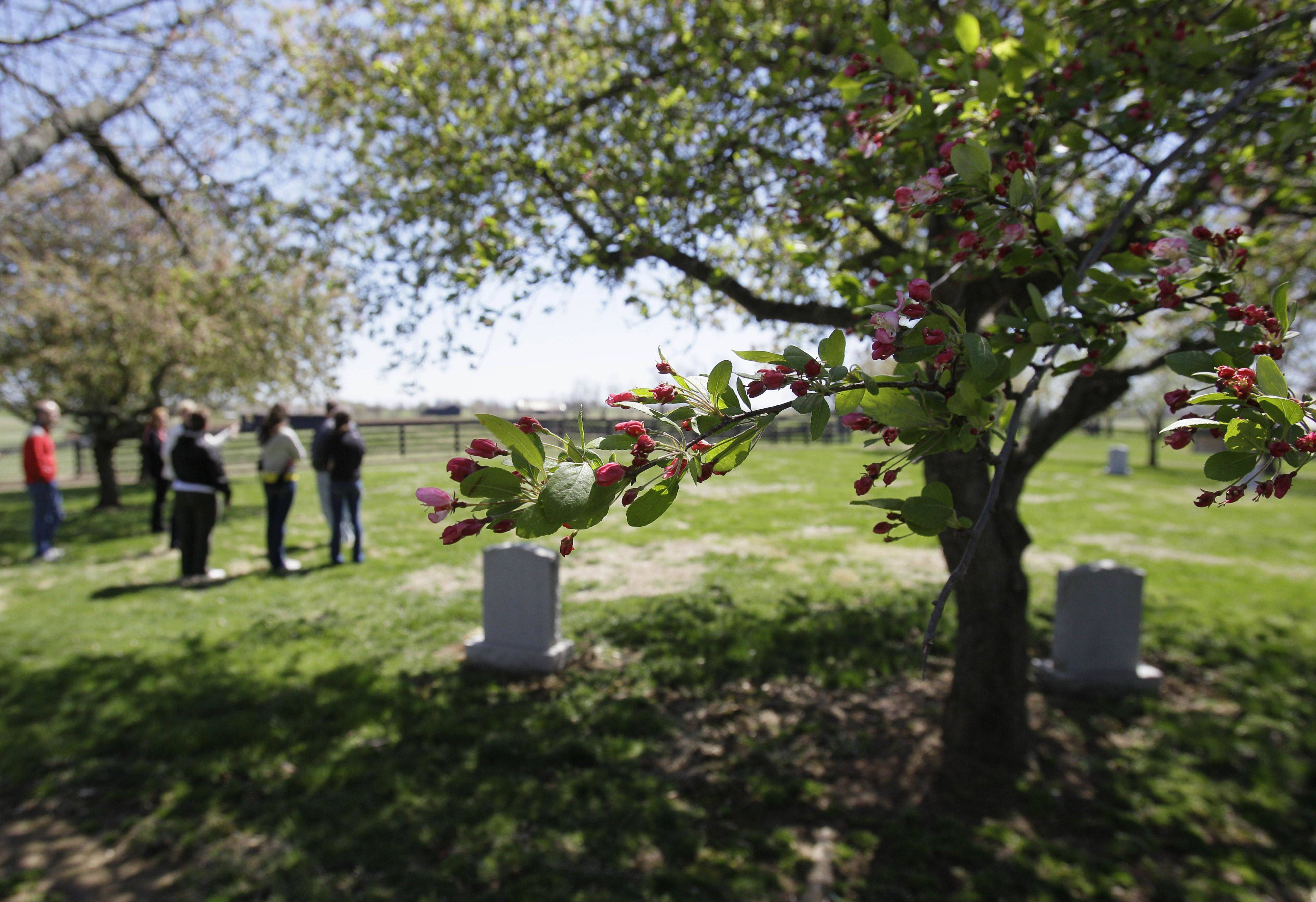 A horse cemetery under a flowering tree is part of the tour of Three Chimneys Farm in Midway, Ky.