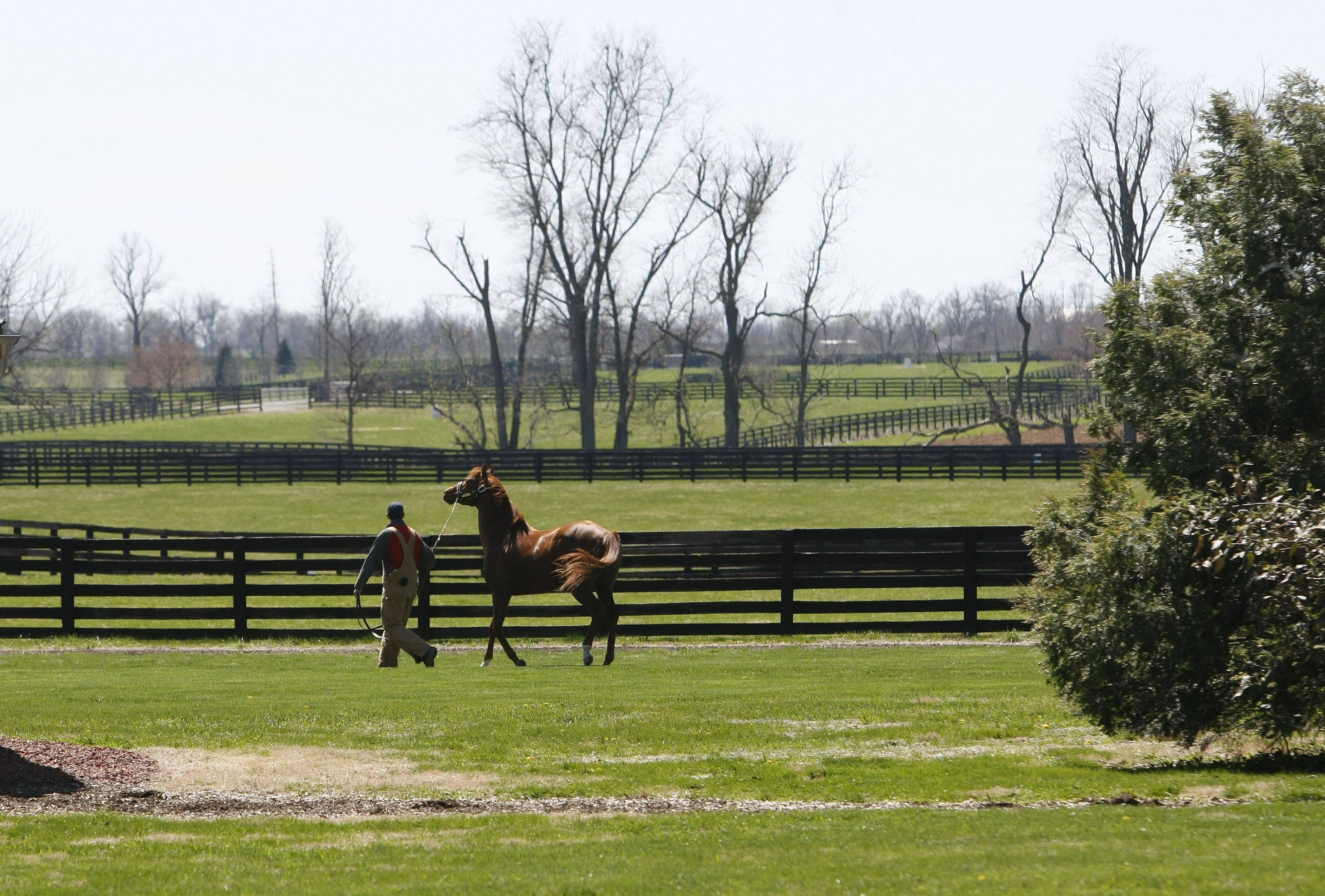 A stallion is taken to a paddock to graze at the Three Chimneys Farm in Midway, Ky. Spring is a popular time to visit Kentucky's bluegrass region.