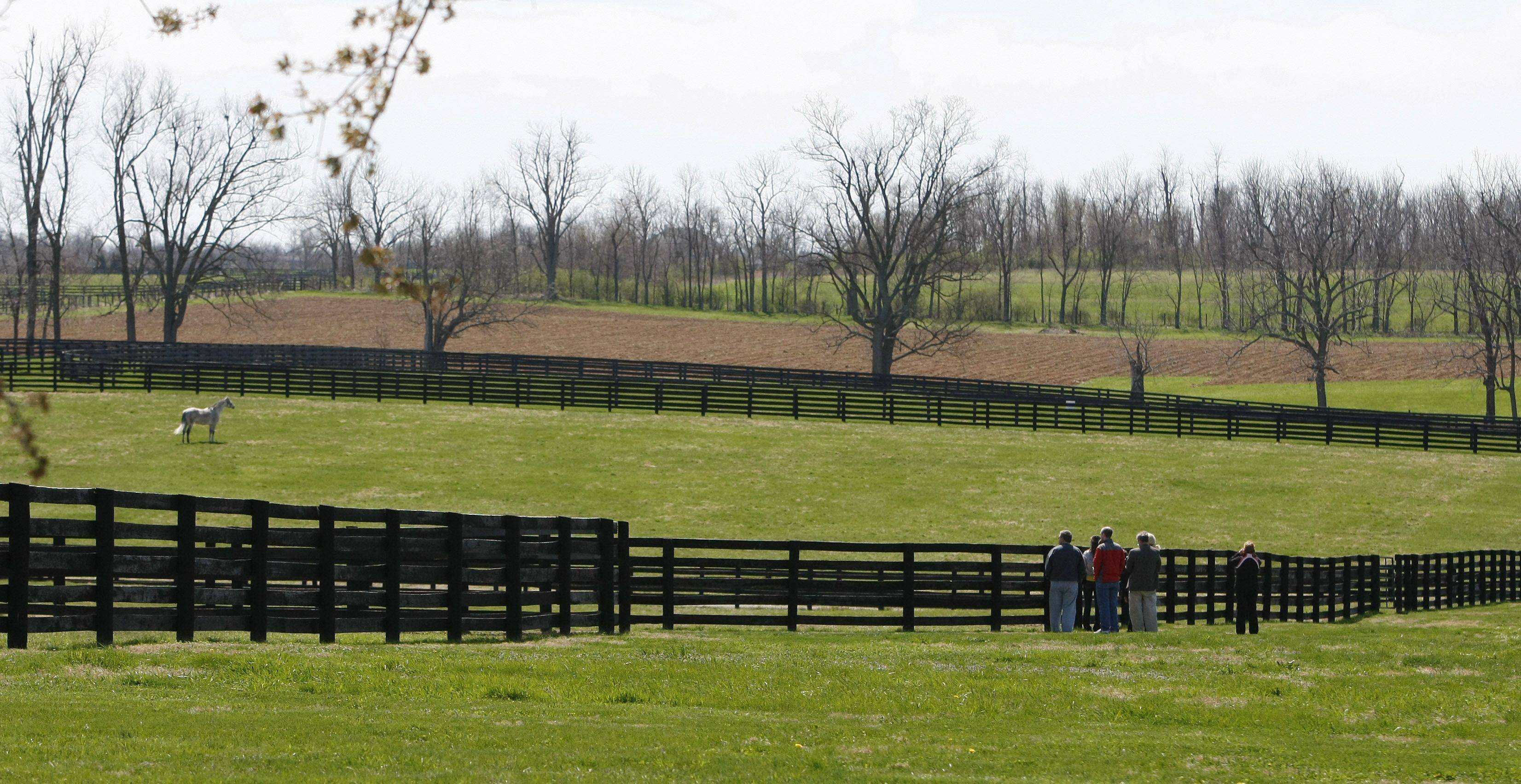 A tour group stands along a fence to view Exchange Rate in a paddock at the Three Chimneys Farm in Midway, Ky. Sleek thoroughbreds are the stars in Kentucky's bluegrass region.