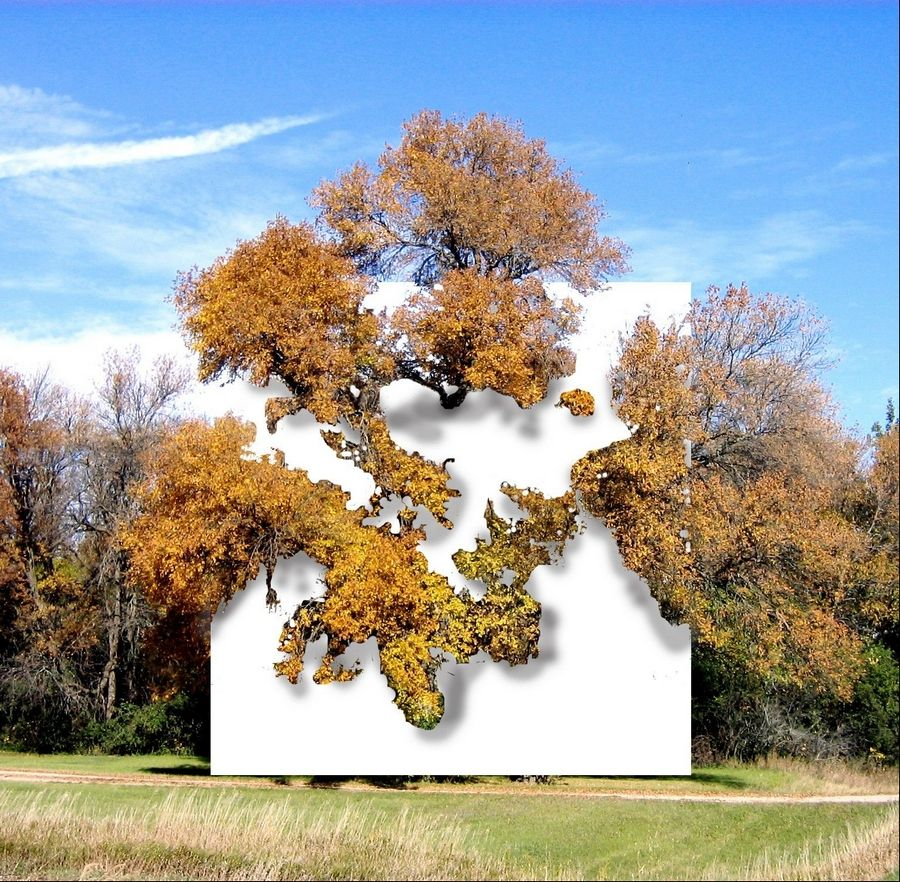 "Letha Wilson's ""Wall in Blue Ash Tree"" will put a 16-foot canvas around the branches to turn a tree into a living 3-D painting/sculpture."
