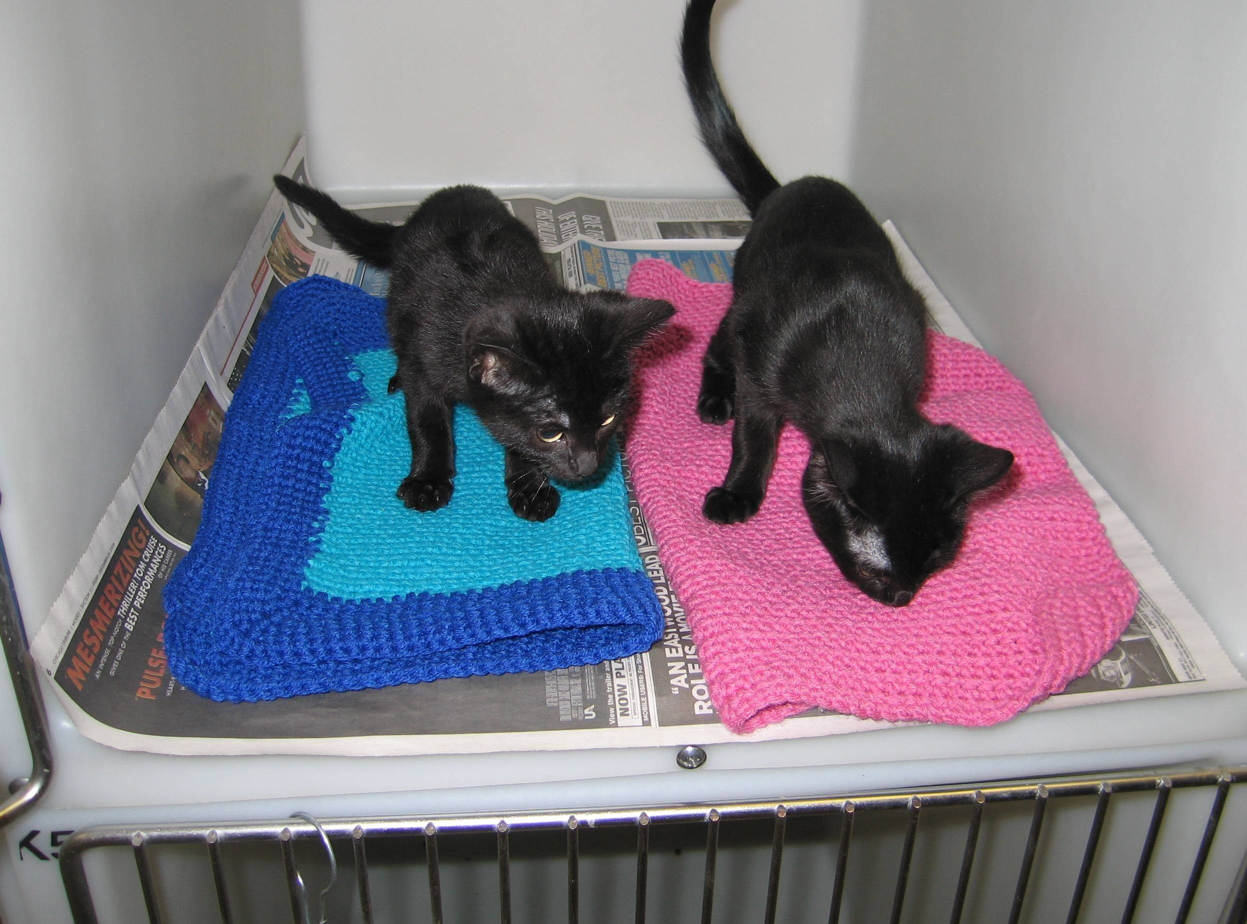 "Two kittens check out their new handmade ""blankies"" at the DuPage Animal Control Shelter in Wheaton."