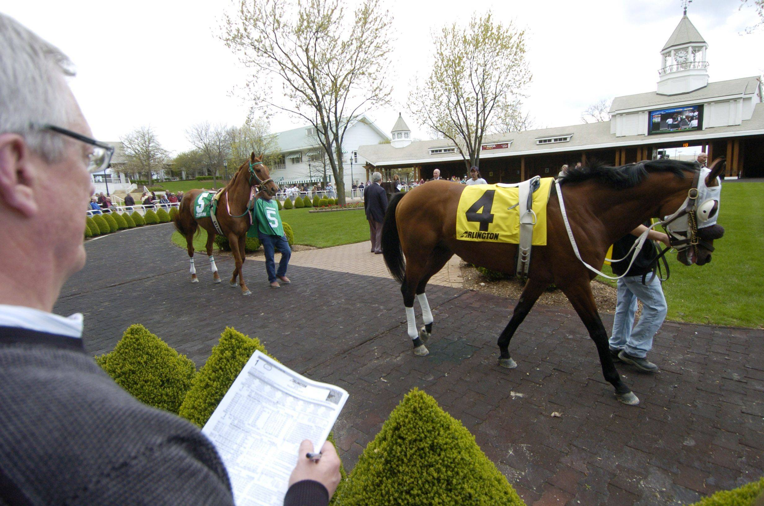 Pat Maude of Palatine watches horses from the first race, including Strait of Mewsina, right, and Ship's Captain, pass by in the paddock on opening day at Arlington Park Friday.