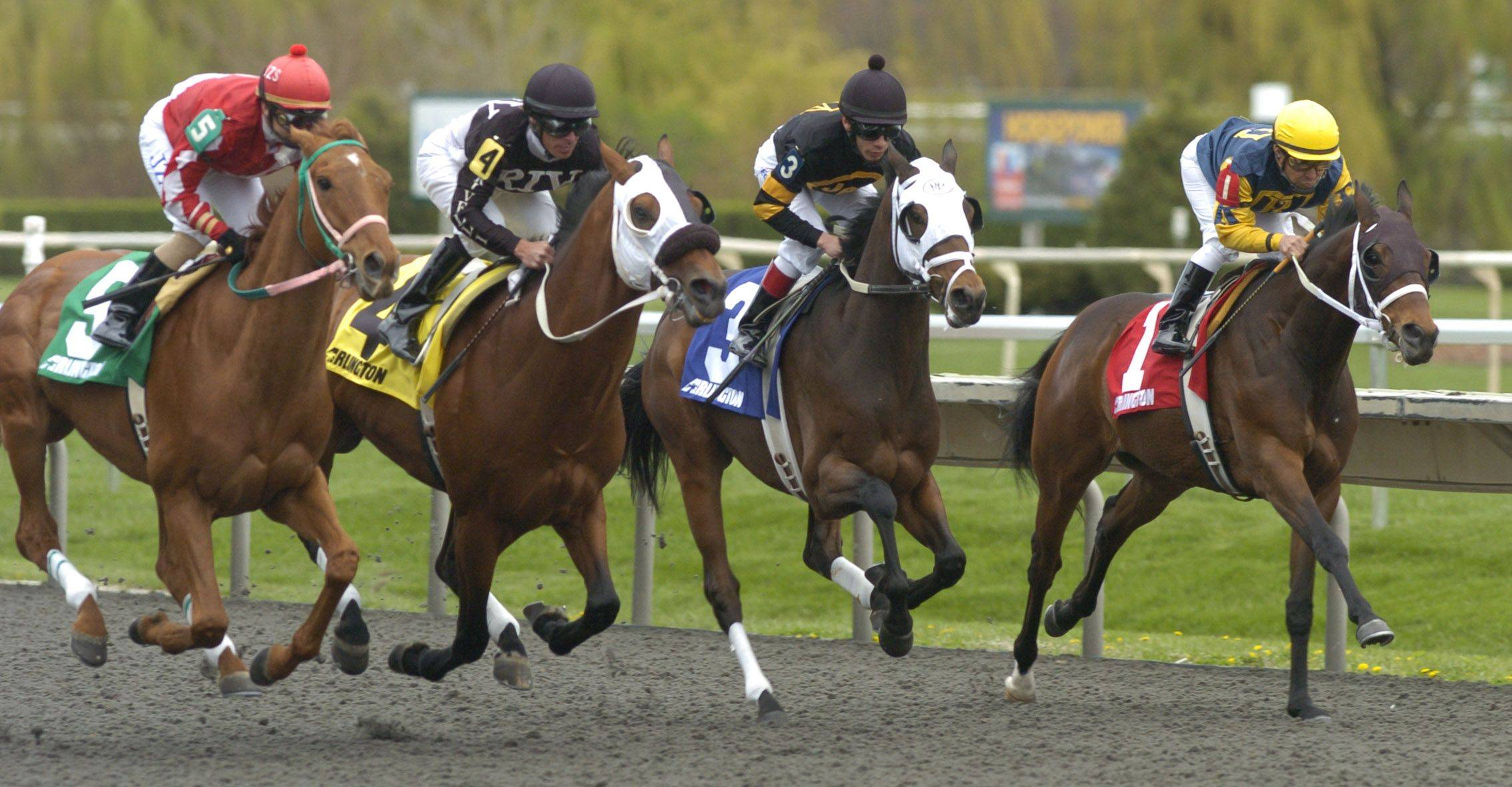 Horses in the first race remain bunched shortly after leaving the starting gate Friday.