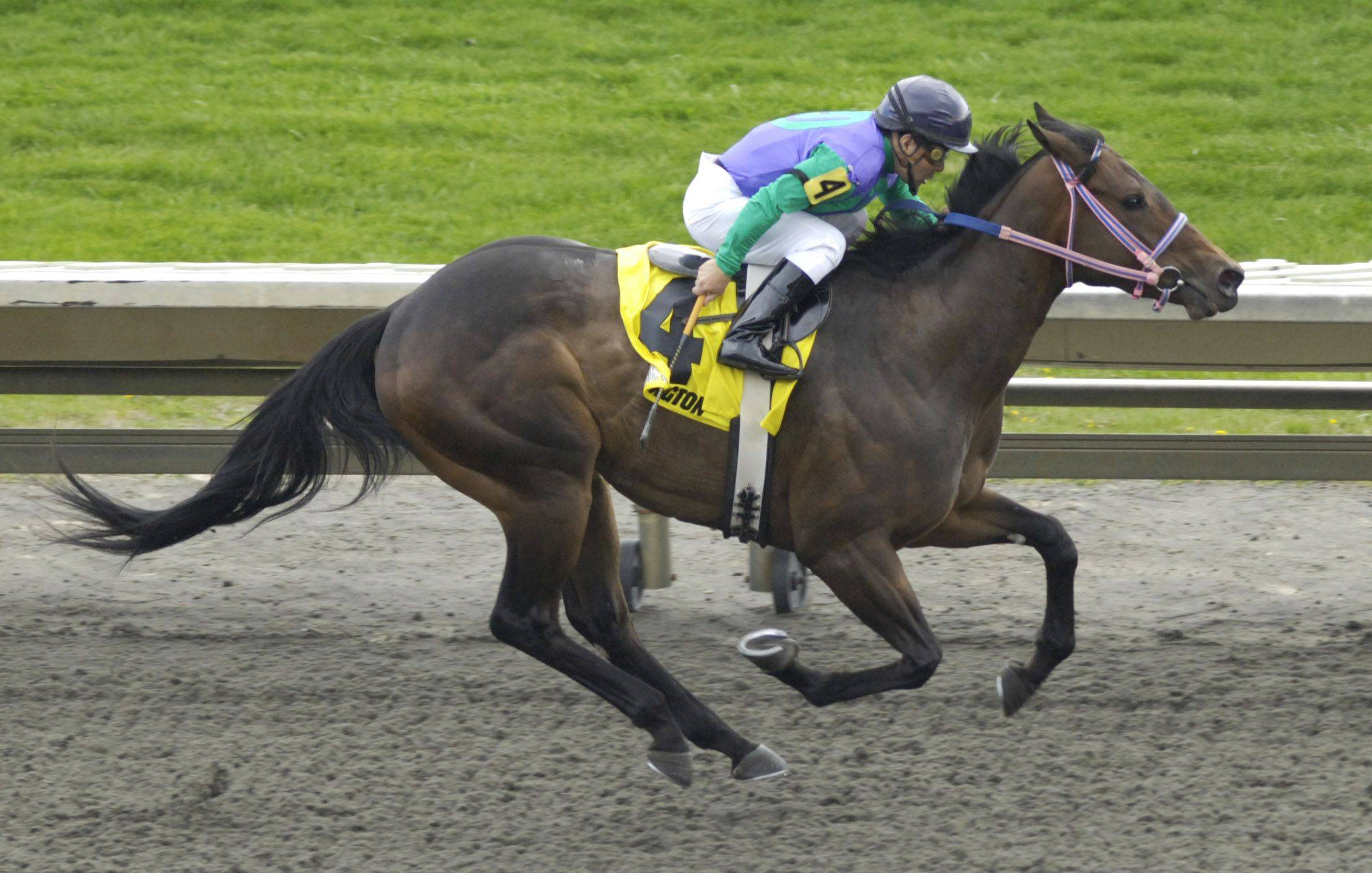 Royal Posh with jockey Eduardo Perez heads for the finish in the fourth race Friday.