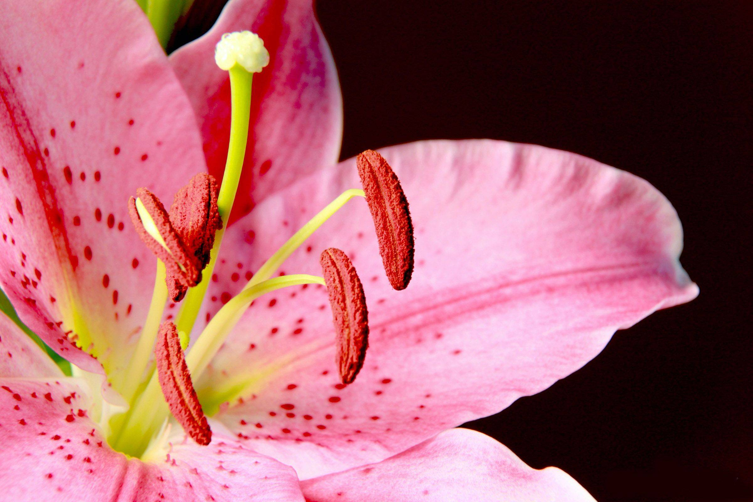 A colorful lilly.