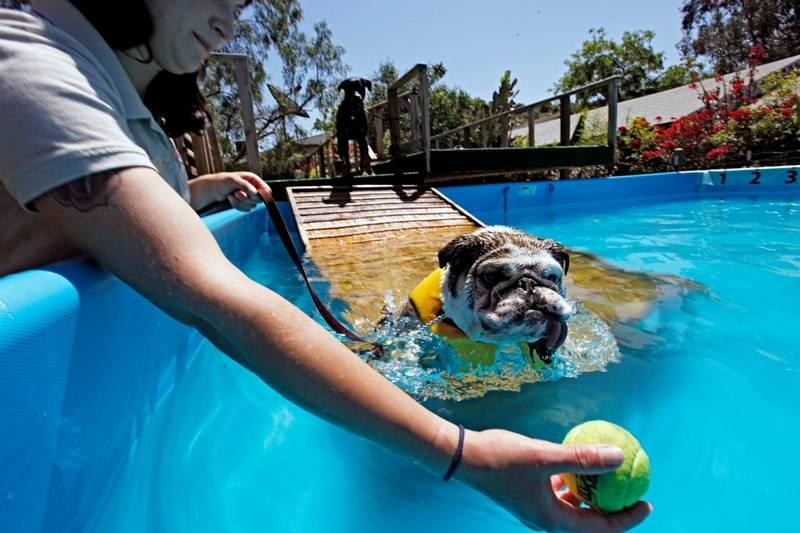 Dogs and water how to play and exercise safely Valentine pool swimming lessons