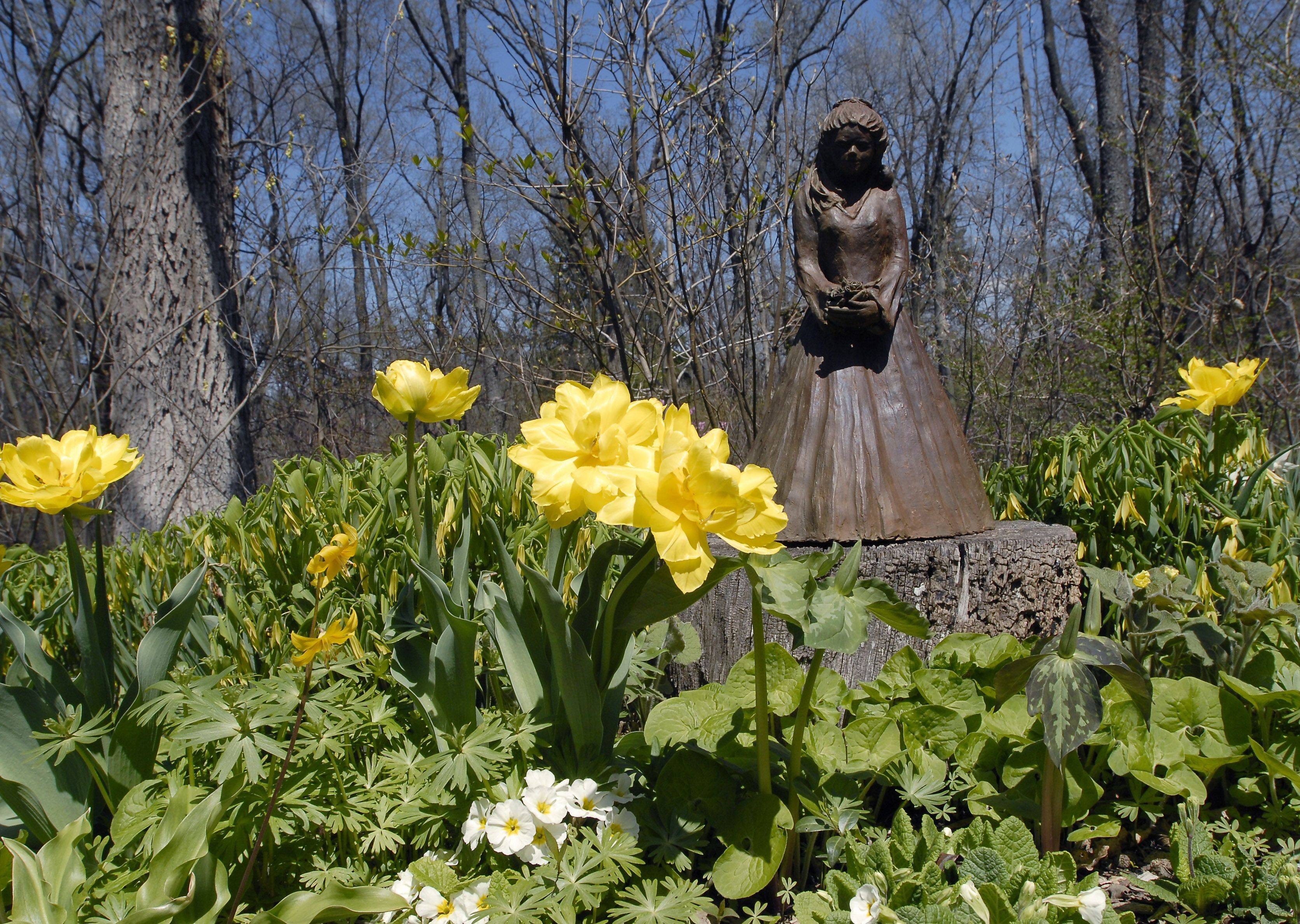 Double yellow tulips pop up around statuary in the woodland garden.