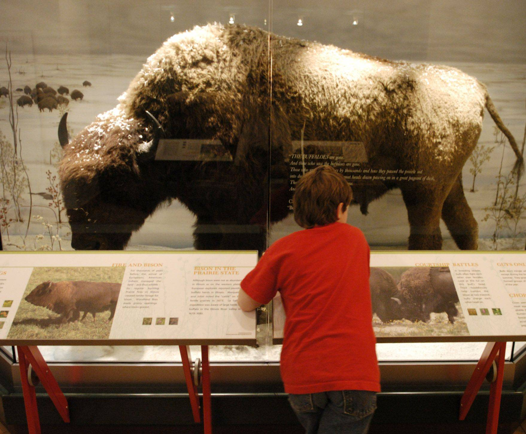 "Get your ""Passport to Adventure"" and check out the Bison exhibit at the Tekakwitha Woods Nature Center in St. Charles."