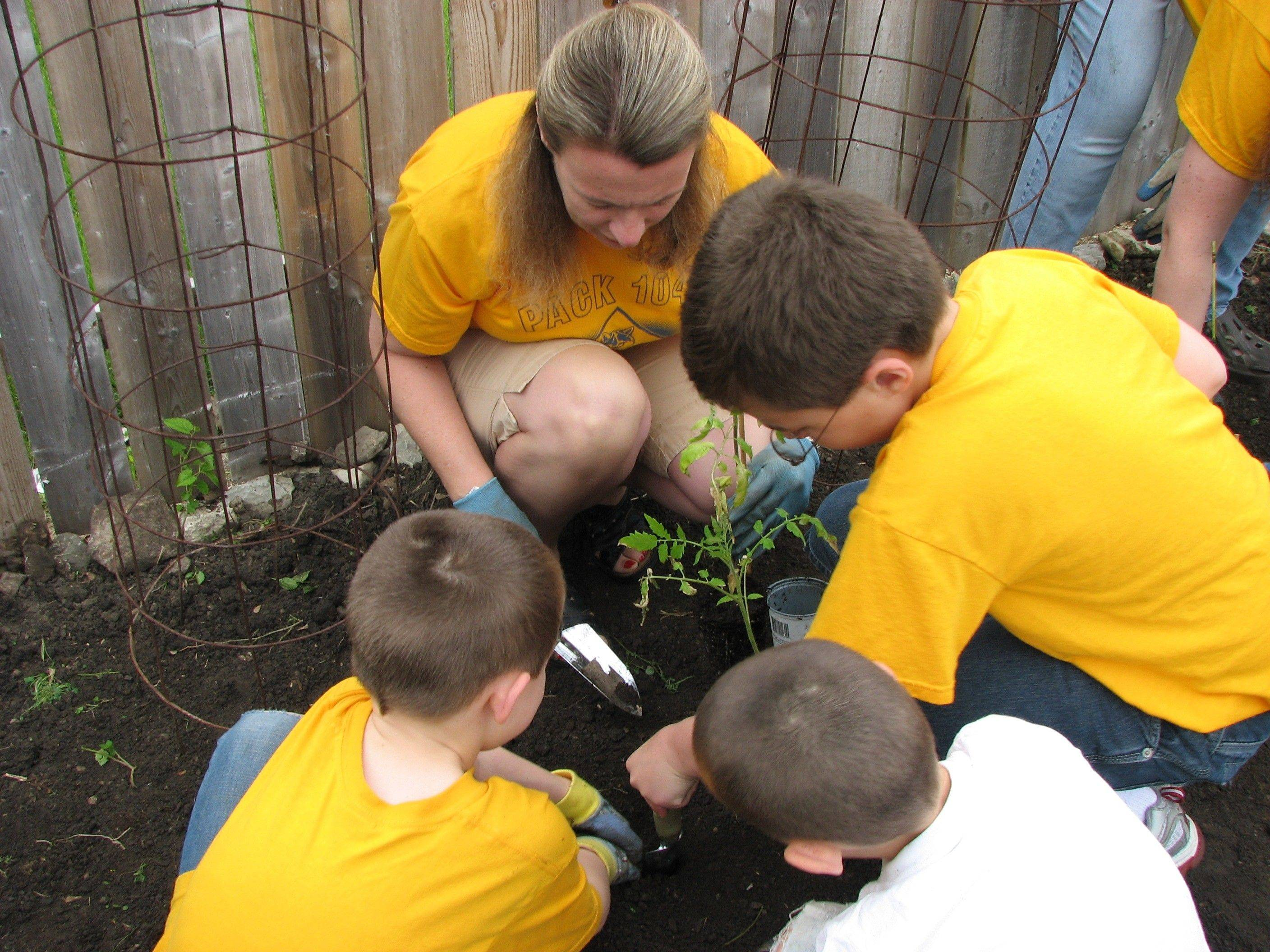 Members of Cub Scout Pack 1047 in Gilberts plant the crops that will provide more than 1,000 vegetables to families this summer through the Daily Herald's Giving Garden campaign.