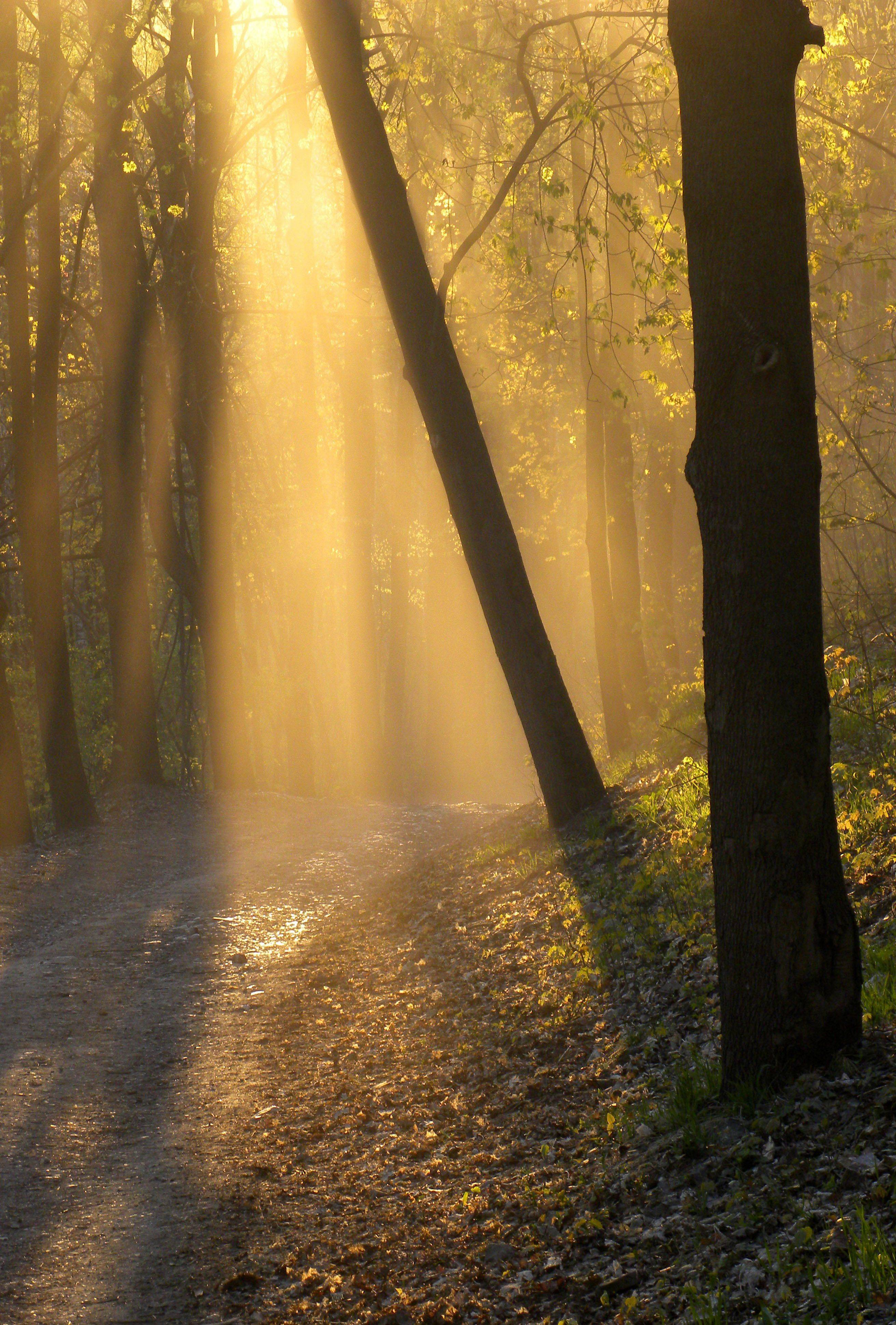 Sun streaks through the forest on a sunny afternoon after a car traveled down a dirt road, leaving behind a mystical dust cloud.