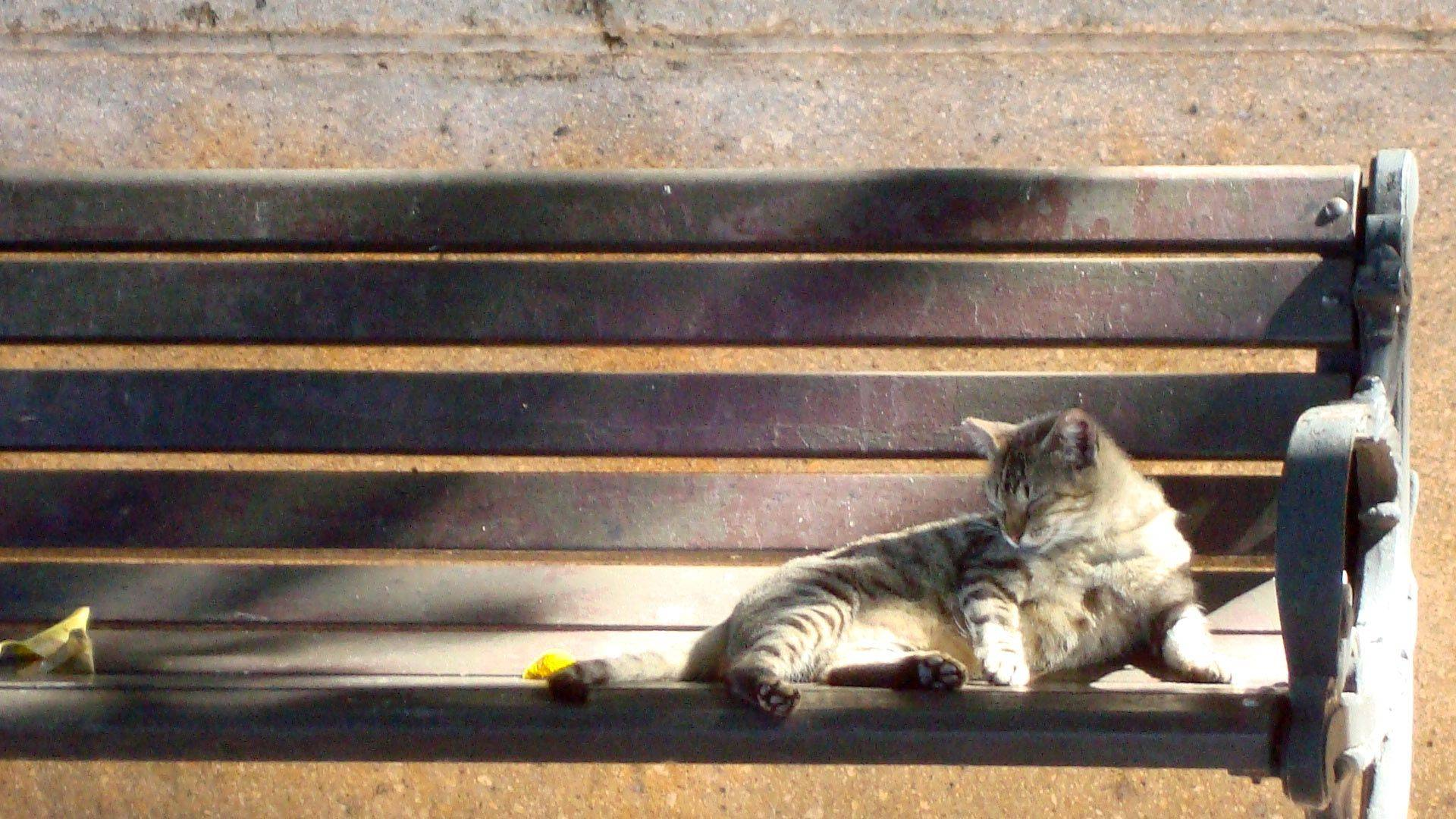 This photo was taken in San Juan, Puerto Rico while on vacation. They have a large population of cats and I caught this one napping on a bench in a park.