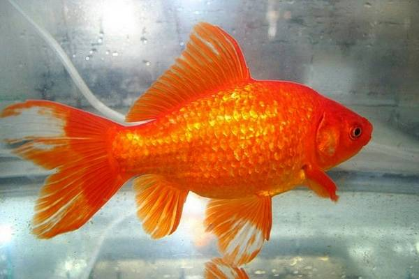 how to keep that goldfish from the carnival alive