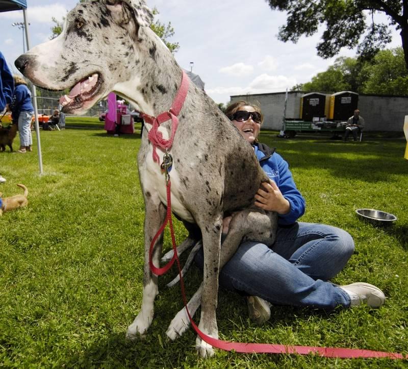 Elk Grove Village Park District Dog Training