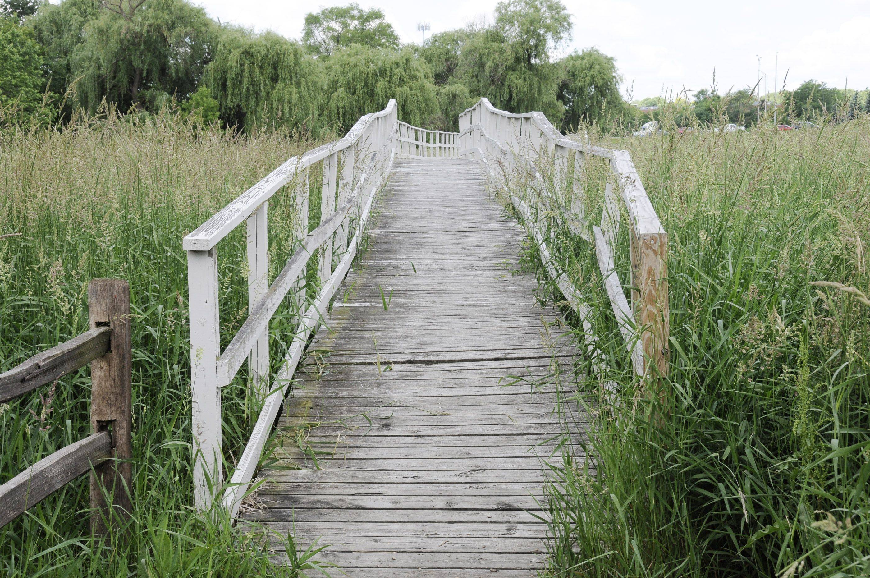 Itasca officials are considering whether to replace the boardwalk at Spring Brook Nature Center with a floating design that would allow for more stormwater retention.