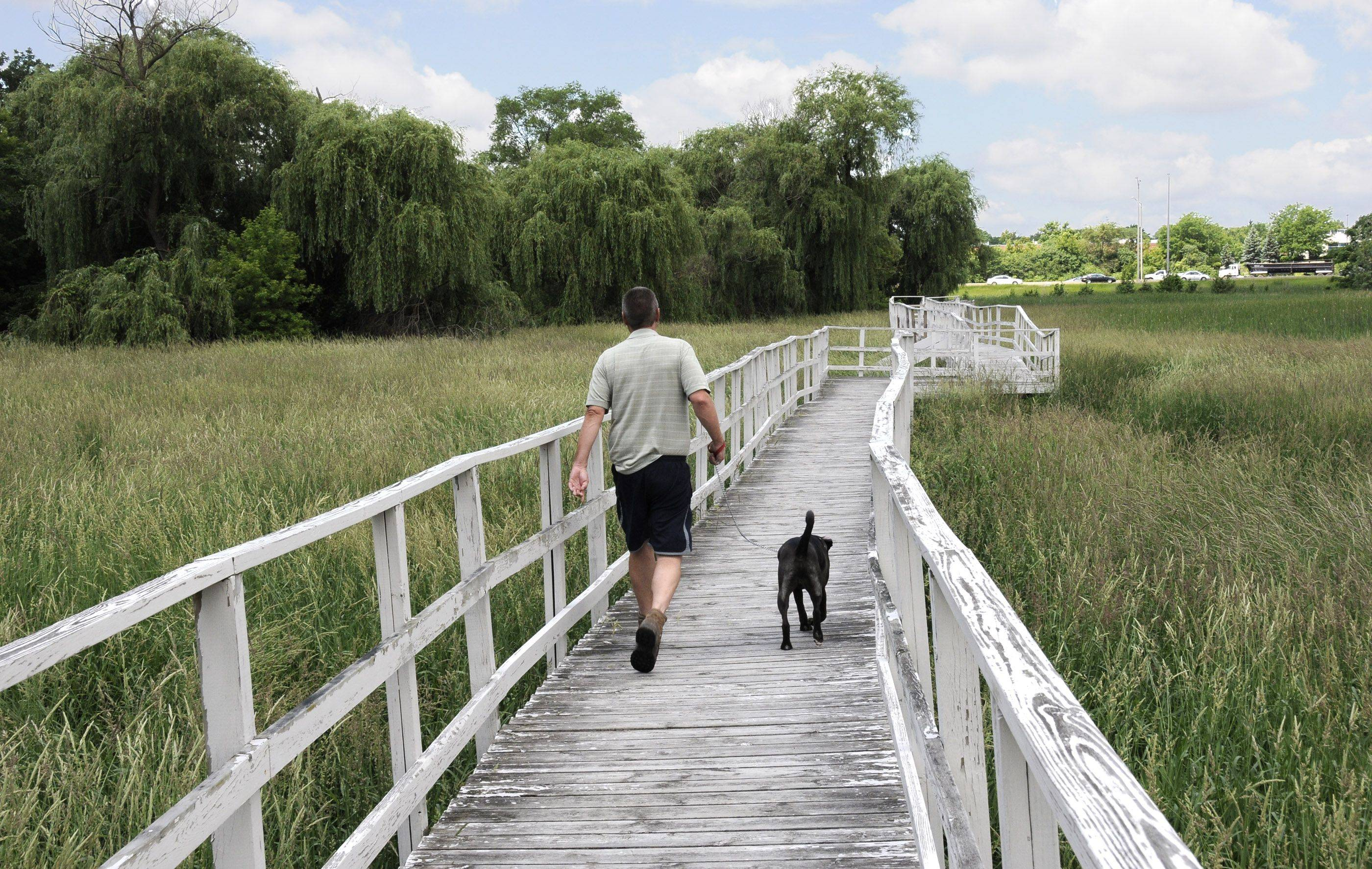 Itasca officials may use $108,000 in hotel tax revenues, which can only be used to promote tourism, to replace the Spring Brook Nature Center boardwalk. Visitors like Rob Kueking of Addison, and his dog Bentley, often stroll in the area.