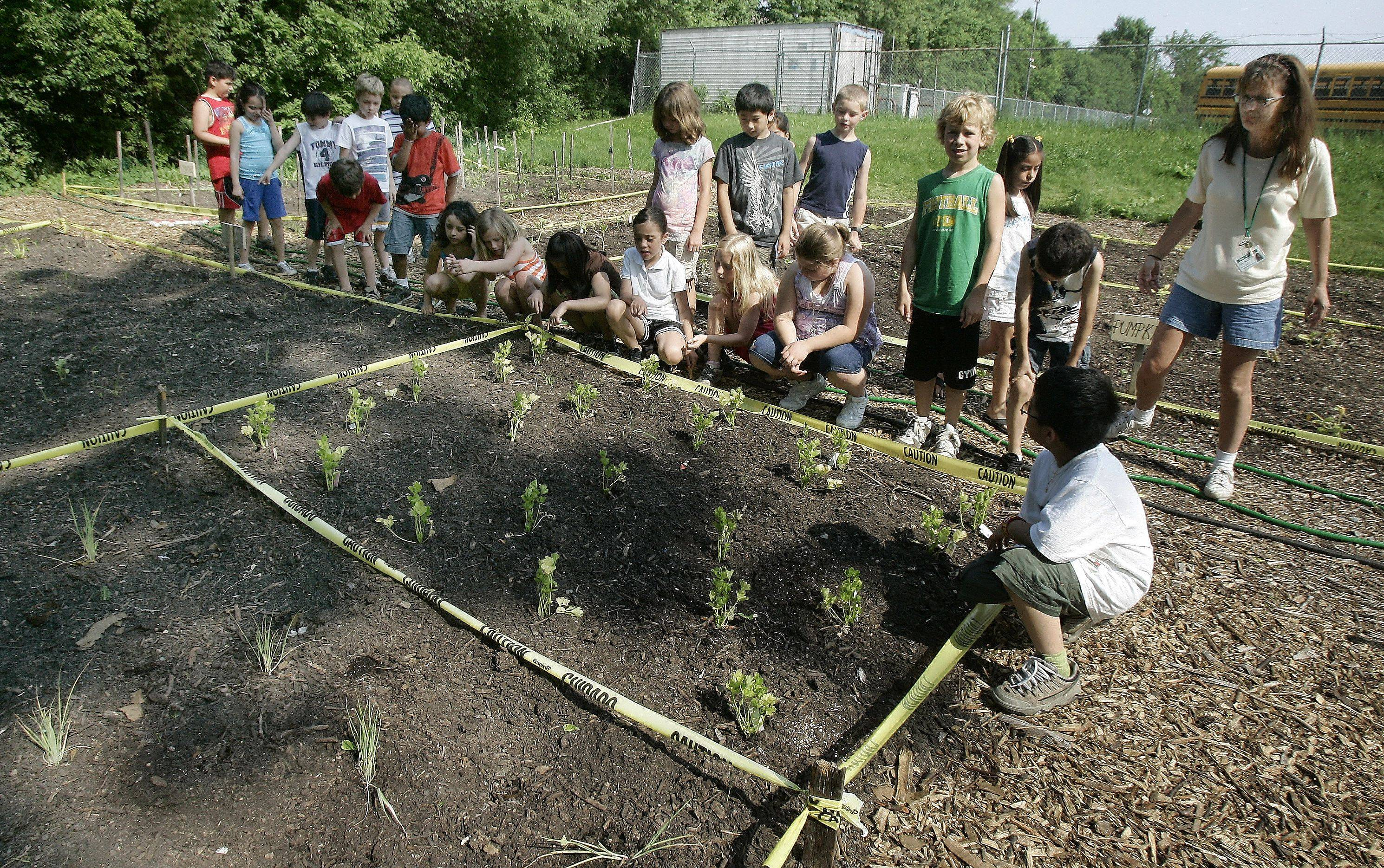 Students listen to substitute teacher Tracy Wrisley as she leads Brandy Cucci's second-grade class around the Harvest Garden at Woodland Elementary School West in Gages Lake.