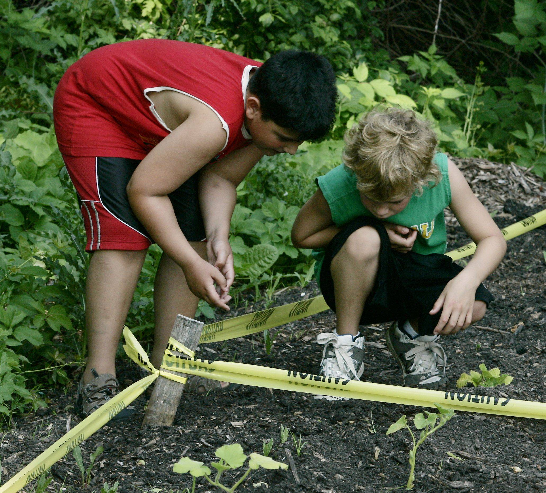 Evan Alexakos, left, and Jake Lester, both 8, check out the plants that they buried earlier this spring as they come out of the ground.