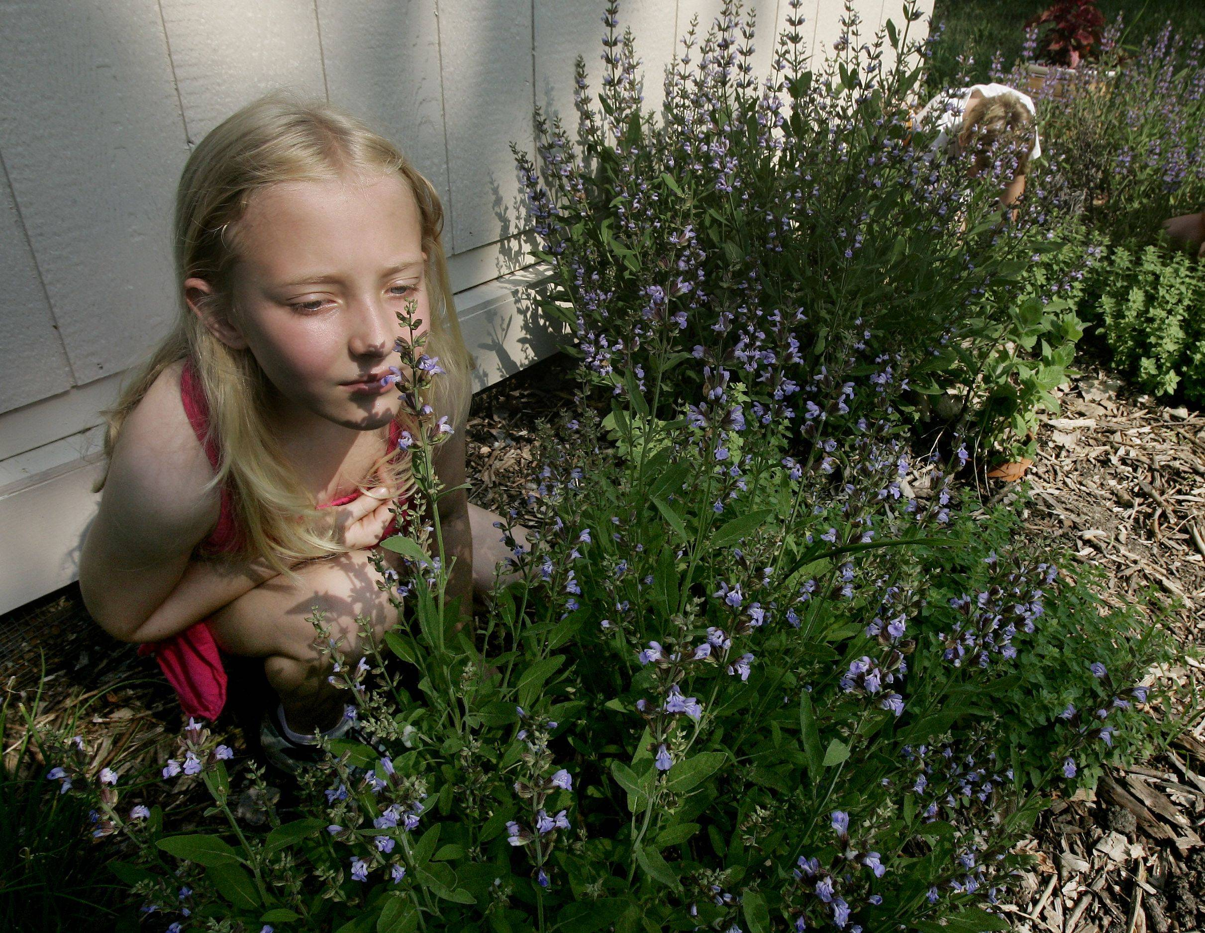 Allison Armstrong, 7, smells a plant in the herb garden.